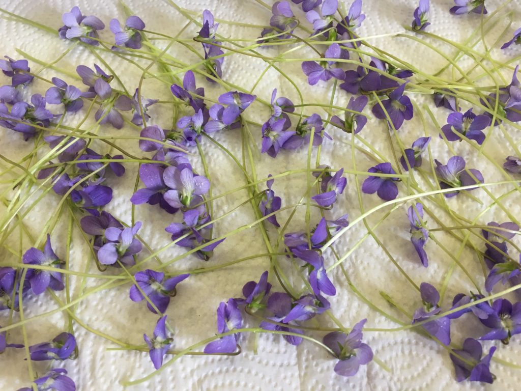 cleaning violets to sugar them