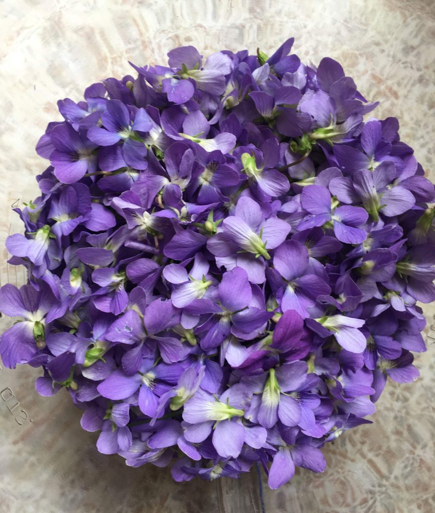 wild violet harvest things to do with violets