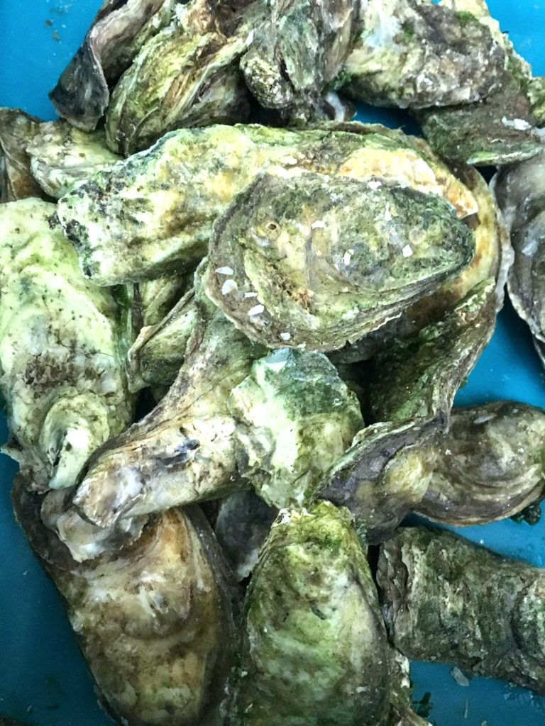 oysters for oyster parties