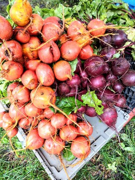 beets at the farmers market